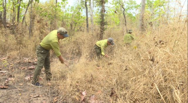 Tăng cường công tác phòng chống cháy rừng trên địa bàn tỉnh Đắk Lắk