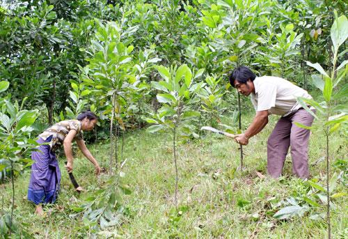 Kế hoạch triển khai trồng rừng năm 2018