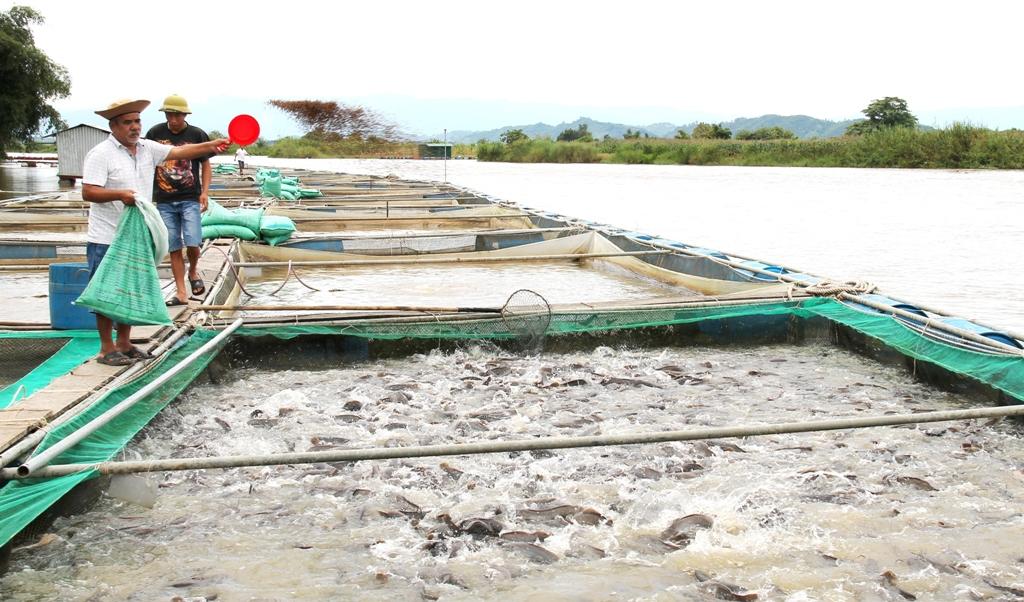 Kế hoạch triển khai chương trình phát triển kinh tế thủy sản bền vững giai đoạn 2018-2020