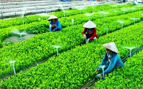 Cam kết tham gia kế hoạch thí điểm phát triển toàn diện Hợp tác xã nông nghiệp của tỉnh
