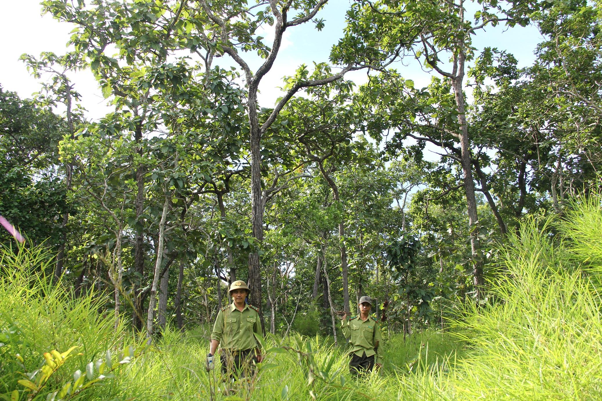 Triển khai Chương trình mục tiêu phát triển Lâm nghiệp bền vững giai đoạn 2016-2020