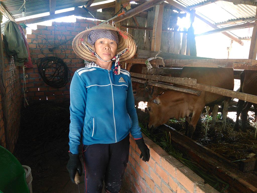 Mô hình tổ liên kết chăn nuôi bò nhốt thâm canh của Hội viên phụ nữ xã Hòa Sơn, huyện Krông Bông