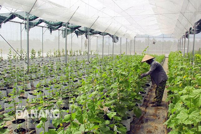 Rà soát, bố trí quỹ đất để đầu tư sản xuất nông nghiệp ứng dụng công nghệ cao