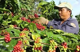 Ban hành Kế hoạch thực hiện Đề án tái cơ cấu kinh tế tỉnh Đắk Lắk