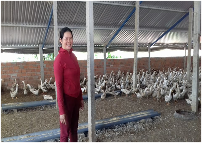 Làm giàu từ mô hình nuôi vịt đẻ trứng