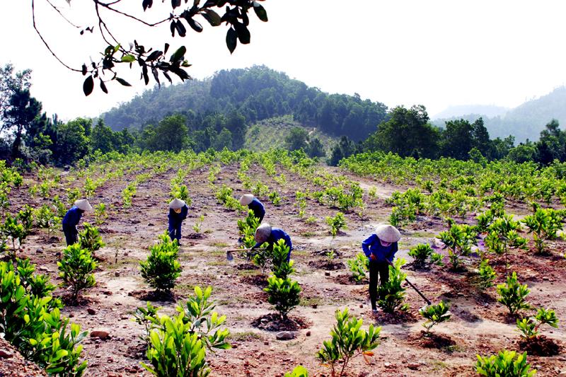 Bổ sung Kế hoạch trồng rừng thay thế năm 2018 cho Ban quản lý Khu bảo tồn thiên nhiên Ea Sô