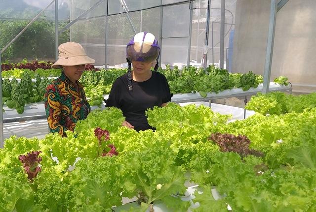 Mạnh dạn đầu tư mô hình trồng rau thủy canh