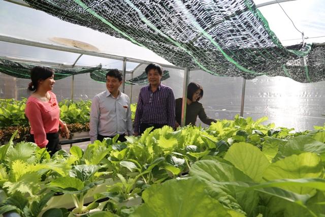 Bí thư Thành ủy Buôn Ma Thuột thăm mô hình rau công nghệ cao tại trường THCS Trần Quang Diệu