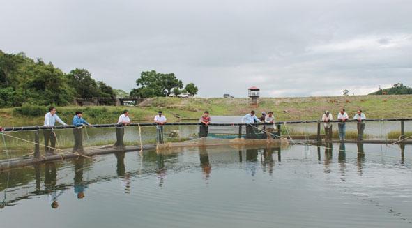 Tăng cường quản lý nuôi thủy sản lồng bè trên sông, hồ chứa thủy lợi, hồ thủy điện thuộc địa bàn tỉnh Đắk Lắk