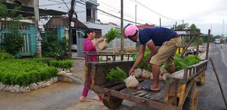 Huyện M'Đrắk hoàn thành kế hoạch trồng rừng năm 2018