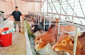 Chỉ  thị về việc phòng, chống dịch bệnh gia súc, gia cầm vụ Đông Xuân trên địa bàn tỉnh