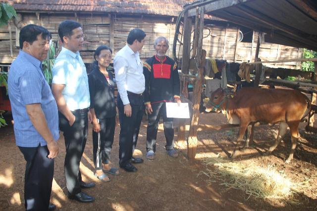 Ủy ban MTTQ Việt Nam tỉnh: Tặng bò sinh sản cho 6 hộ nghèo buôn K'nia 3