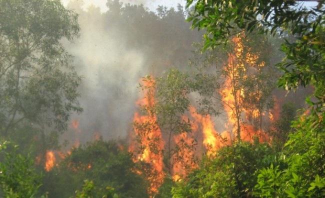 Cảnh báo cháy rừng cấp cực kỳ nguy hiểm tại 12 tỉnh