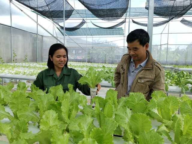 Nông dân M'Đrắk tập trung sản xuất phục vụ Tết