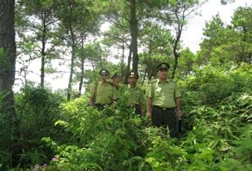 Bổ sung hồ sơ chuyển mục đích sử dụng đất rừng để thực hiện dự án đường tuần tra biên giới