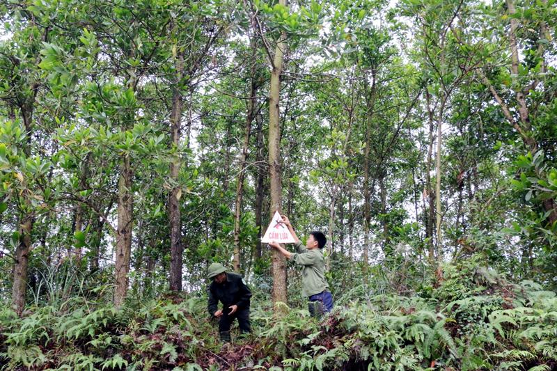 Ban hành kế hoạch bảo vệ rừng và phòng cháy chữa cháy rừng năm 2019