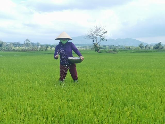 Nông dân huyện M'Đrắk ra đồng đầu năm