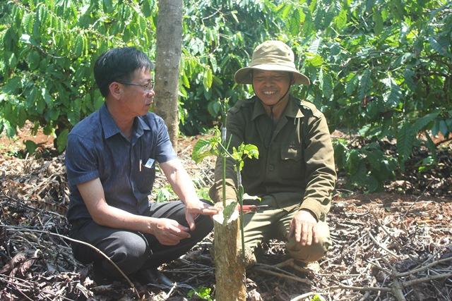 Huyện Cư Kuin nâng cao hiệu quả sản xuất cà phê