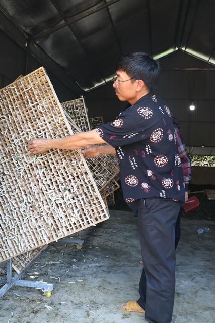 Nông dân Yang Reh phát triển nghề trồng dâu nuôi tằm