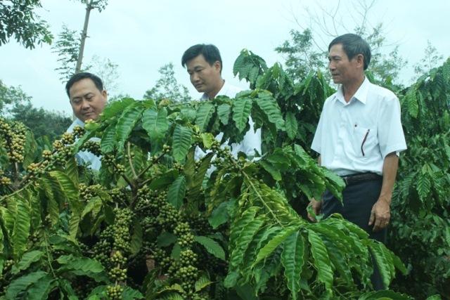 Tín dụng Agribank Đắk Lắk đồng hành với cây cà phê