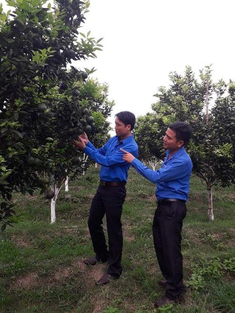 Huyện đoàn M'Đrắk: Tổ chức tham quan mô hình trồng cây ăn quả an toàn theo mô hình hữu cơ sạch