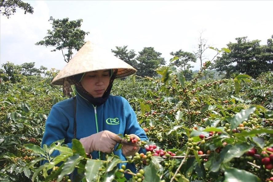 Nghiên cứu dự án cung cấp hệ thống dự báo thời tiết cho cà phê bền vững