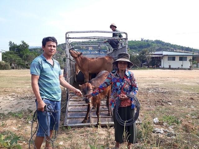 Huyện M'Đrắk trao tặng 10 con bò giống cho các hộ nghèo và cận nghèo