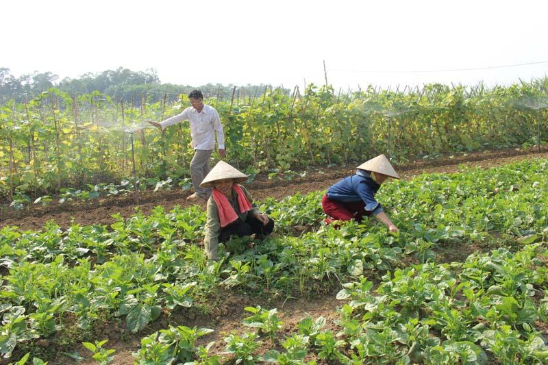 Chủ trương xây dựng Đề án đẩy mạnh cơ giới hóa sản xuất nông nghiệp tạo động lực tái cơ cấu ngành nông nghiệp trên địa bàn tỉnh đến năm 2030
