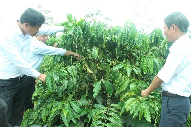 """Agribank Đắk Lắk  31 năm kiên định mục tiêu phục vụ """"Tam nông"""""""