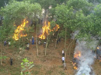 Chủ động ứng phó, phòng chống cháy rừng