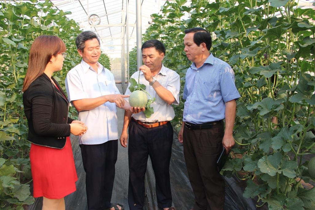 Kế hoạch triển khai Đề án Rà soát, điều chỉnh, bổ sung Đề án phát triển nông nghiệp ứng dụng công nghệ cao tỉnh Đắk Lắk đến năm 2020