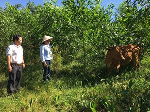 """Hiệu quả thiết thực từ Dự án """"Ngân hàng bò"""" tại M'Đrắk"""