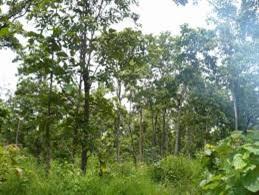 Triển khai Đề án bảo vệ, khôi phục và phát triển rừng bền vững vùng Tây Nguyên giai đoạn 2016- 2030