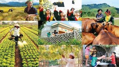 Phê duyệt Kế hoạch thực hiện Dự án Giảm nghèo khu vực Tây Nguyên tỉnh Đắk Lắk năm 2019