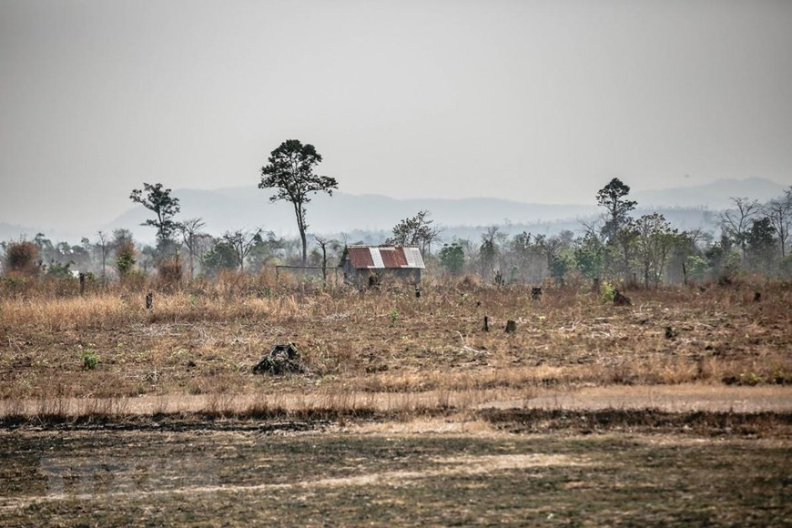 Đắk Lắk có 4.630 ha cây trồng bị thiếu nước tưới