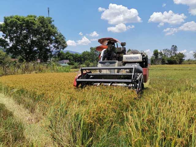 Huyện M'Đrắk: Được mùa vụ lúa Đông Xuân, nông dân phấn khởi