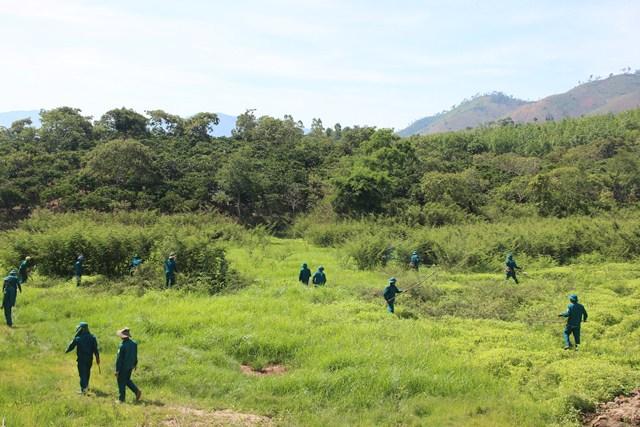 Huyện Krông Bông ra quân diệt trừ cây mai dương.