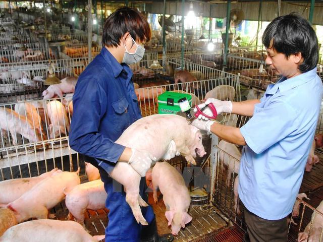 Quyết định về việc phê duyệt Kế hoạch tiêm phòng vắc xin Lở mồm long móng gia súc trên địa bàn tỉnh Đắk Lắk năm 2019.