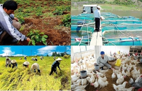 Rà soát, đánh giá việc thực hiện chính sách, tiền lương trong lĩnh vực nông nghiệp và phát triển nông thôn