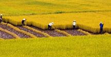 Sửa đổi, bổ sung Kế hoạch chuyển đổi cơ cấu cây trồng trên đất trồng lúa, ban hành theo Quyết định số 586/QĐ-BNN-TT ngày 12/2/2018 của Bộ Nông nghiệp và Phát triển nông thôn