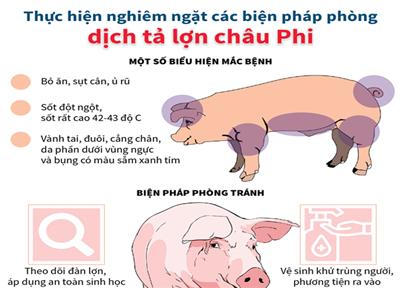 Triển khai quyết liệt, đồng bộ các biện pháp phòng, chống bệnh Dịch tả lợn Châu Phi