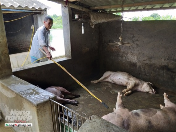 Sở Thông tin và Truyền thông chỉ đạo tăng cường tuyên truyền phòng, chống bệnh Dịch tả lợn Châu Phi