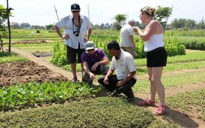 Thành lập Hội đồng thẩm định Đề cương- Dự toán Đề án phát triển du lịch nông nghiệp sinh thái