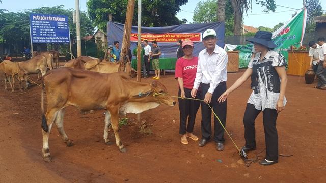 UBMTTQ tỉnh trao bò giống sinh sản cho hộ nghèo xã Ea Hiao
