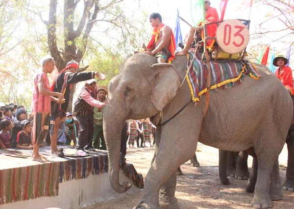Lễ hội Văn hóa truyền thống các dân tộc huyện Buôn Đôn: Lễ cúng sức khỏe cho voi