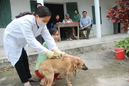 Tập trung triển khai quyết liệt, đồng bộ các giải pháp quản lý chó nuôi và phòng, chống bệnh Dại ở động vật.