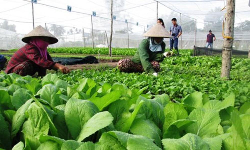 Chủ trương hợp tác triển khai Chương trình nông nghiệp hữu cơ.
