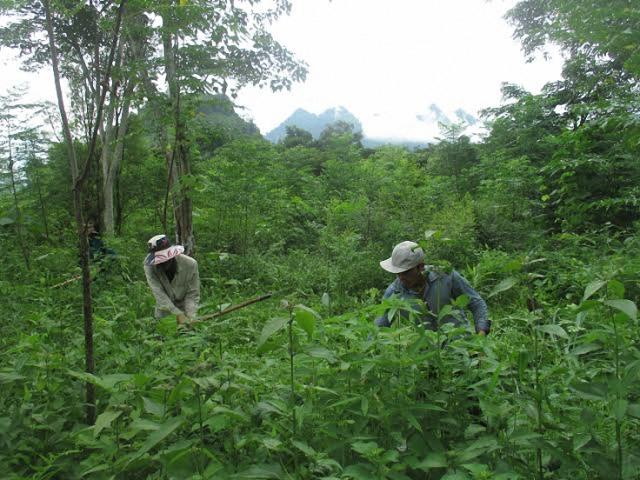 Thực hiện chính sách chi trả tiền dịch vụ môi trường rừng