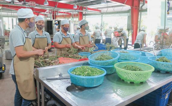 Thực hiện Kế hoạch hành động đảm bảo an toàn thực phẩm trong lĩnh vực nông nghiệp trên địa bàn tỉnh.