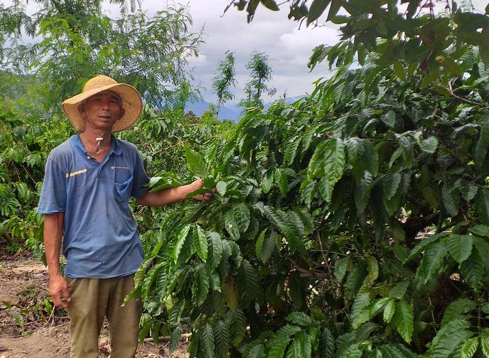 Hiệu quả kinh tế từ trồng cà phê ở xã Dang Kang, huyện Krông Bông